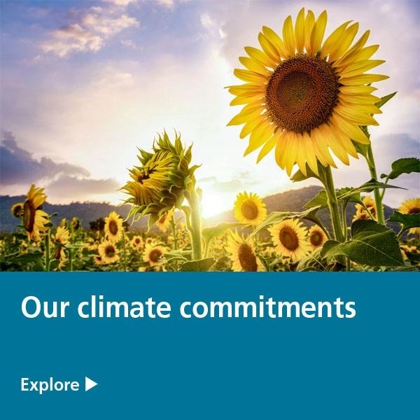 client commitments tile - sunflowers
