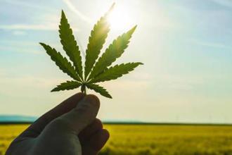 cannabis drogue santé 330x220