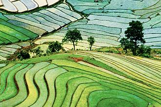 droit environnement agriculture rizière 330x220