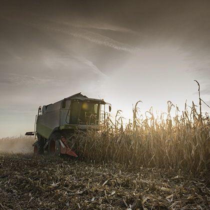 combine harvestisng crop corn