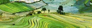 agriculture champs rizière environnement 925x290